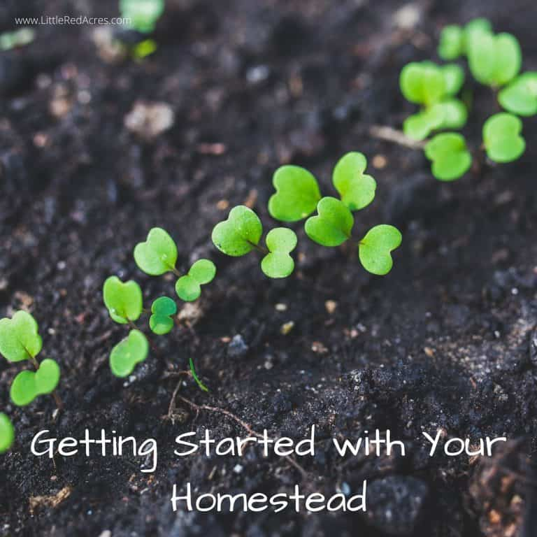 5+ Books on Getting Started with Your Homestead