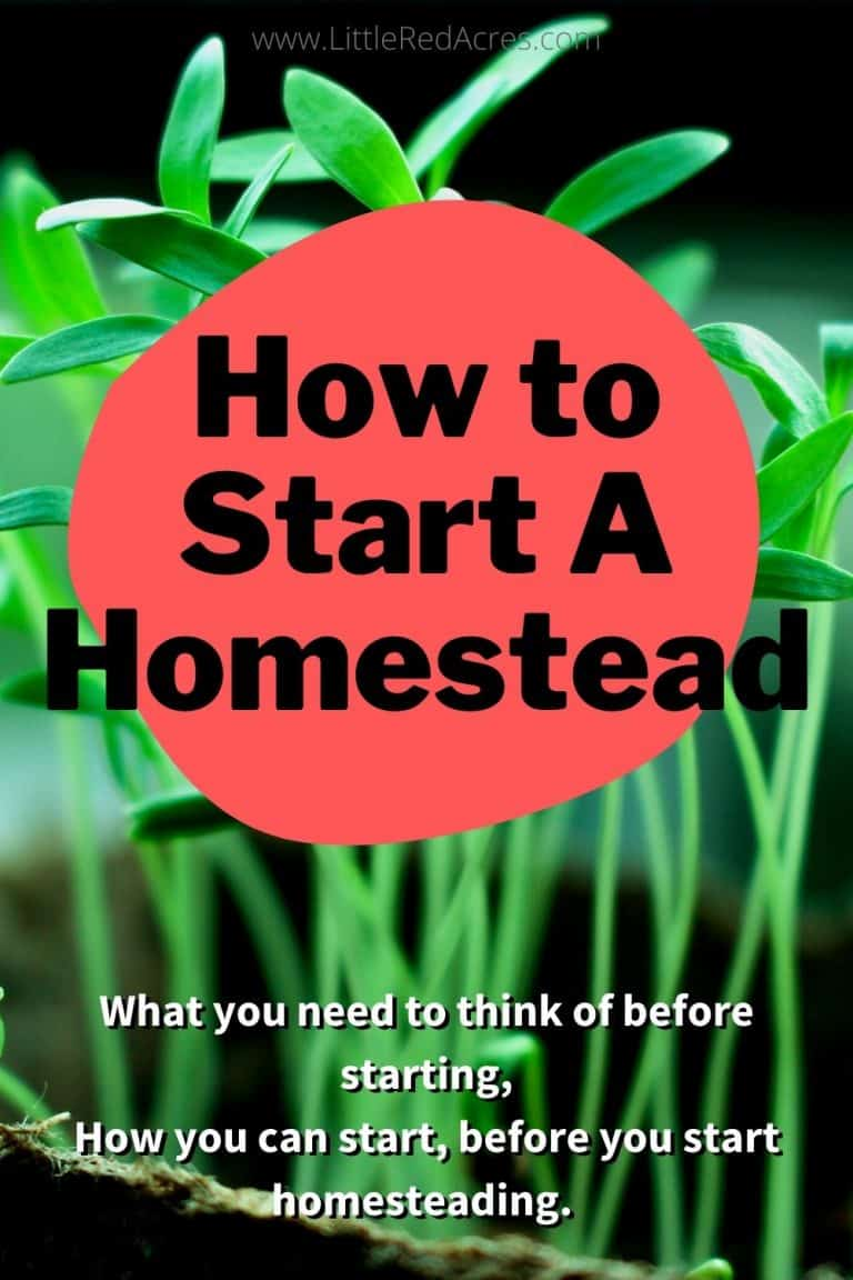How to Start A Homestead