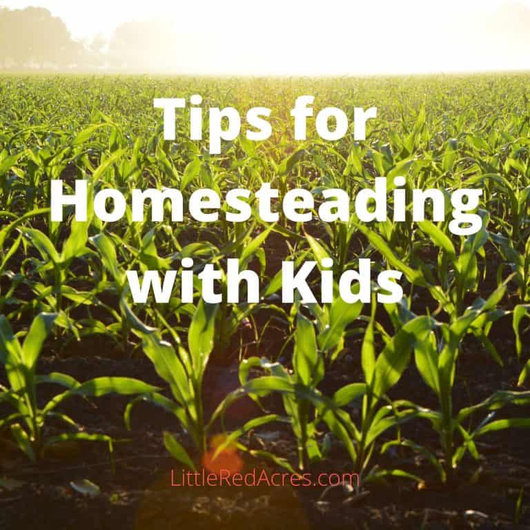 5 Tips to Homesteading with Kids