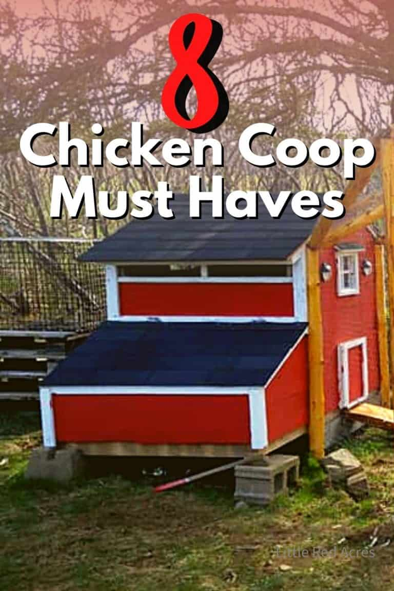 8 Chicken Coop Must Haves