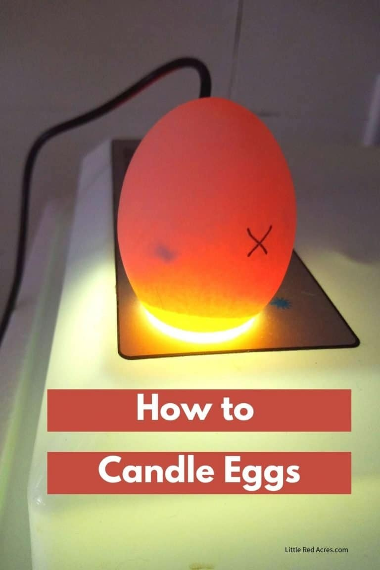 How and Why to Candle Eggs