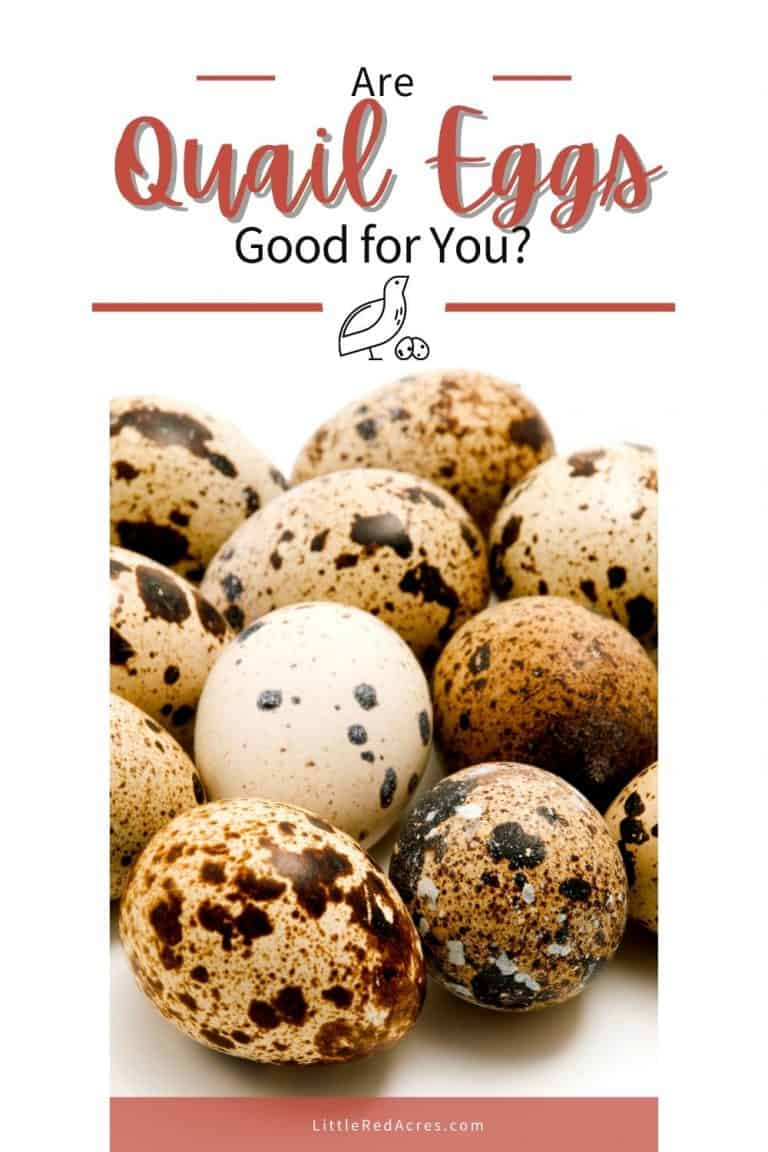 Are Quail Eggs Good for You?