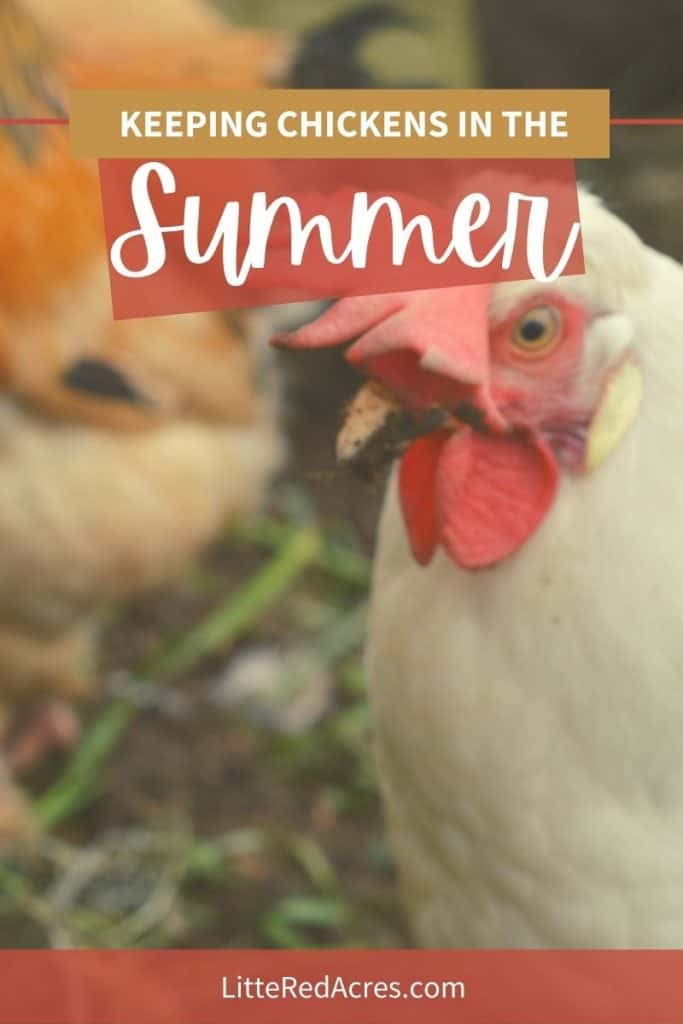 How to Get Started with Chickens
