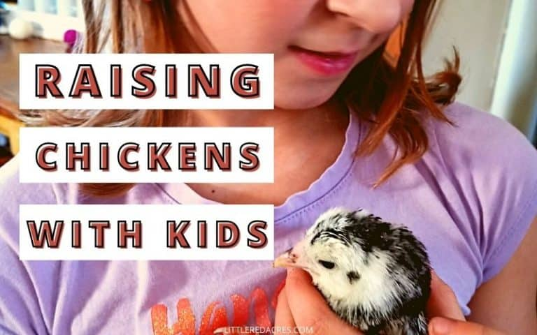Raising Chickens with Kids